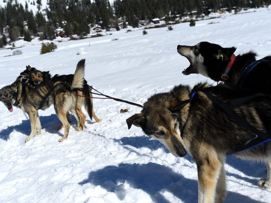 Writer Sarah Litz joins Wilderness Adventures Dog Sled