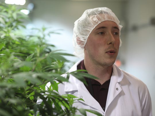 Casey Berg, is cultivation manager at Columbia Care, which has a dispensary in Rochester and a cultivation and manufacturing plant in a seperate building from the dispensary.