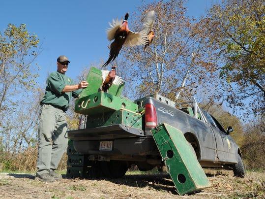 zan 1028 pheasants.jpg