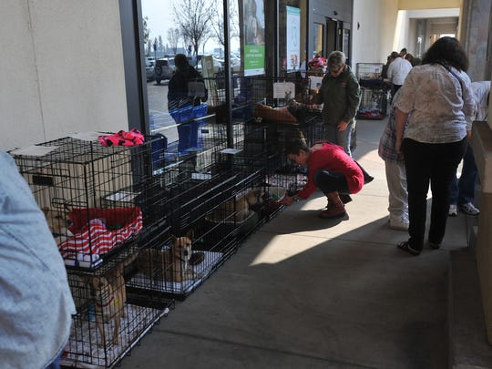 A Central Valley Rescue Railroad pet adoption event at PetSmart in Visalia on Feb. 13, 2016.