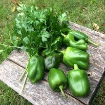 New master gardener training classes starting soon