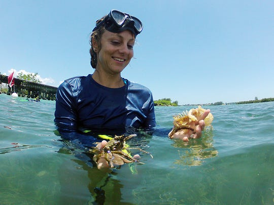 Melinda Brown, an environmental specialist, displays a few of her findings including an egg capsule from a lightning welk (on her left hand) and a spider crab on her right hand during a snorkeling tour in Gasparilla Sound Wednesday afternoon as part of a media tour put together by the Florida Department of Environmental Protection. The DEP is holding free snorkeling-based ecology tours that are open to the public, in June and July.
