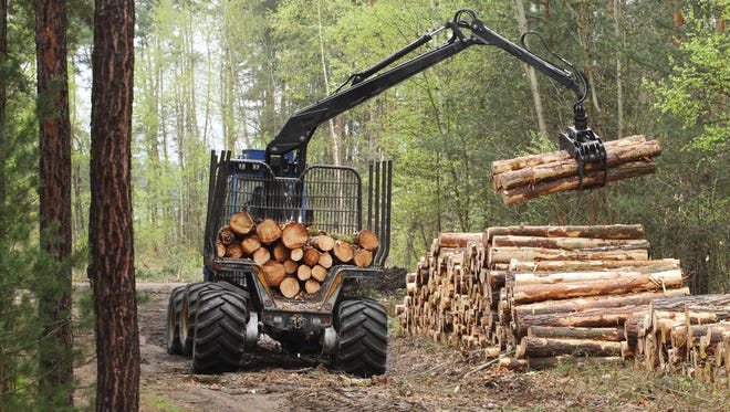 Timber being harvested in a forest.