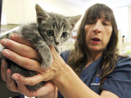 Karen Burden, of the city's Animal Services shelter, shows a small kitten she named Sapphire that was rescued by El Paso firefighters from the floor of a shed.