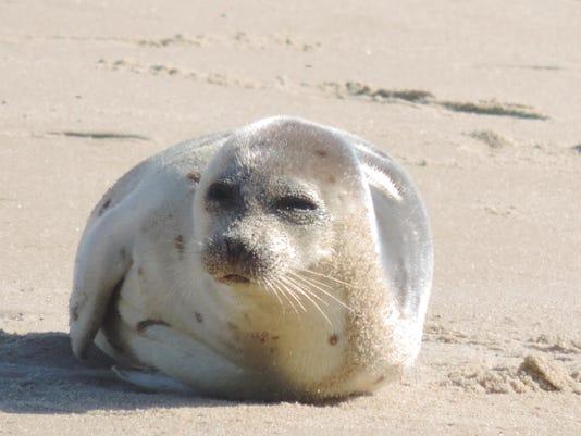 sby mcbp seal
