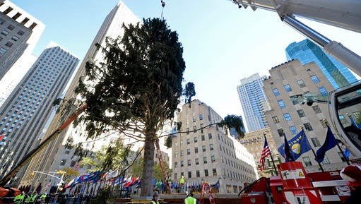 Workers at New York City's Rockefeller Center use a crane to position the 94-foot Norway spruce that will become the Rockefeller Center Christmas tree, Saturday, Nov. 12, 2016. Once decorated, the tree's 50,000 lights will be switched on during a Nov. 30 television broadcast.