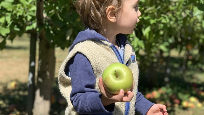 Jack Barrett, 3, of Portsmouth picks an apple at Rocky Brook Orchard in Middletown on Saturday, one of the busiest days in the orchard's history, according to owner Greg Ostheimer.