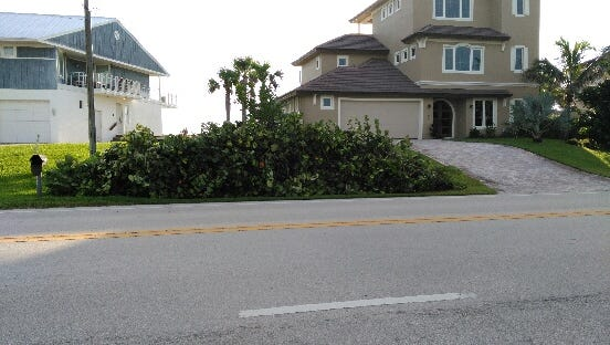 Sea grapes piled on the curb outside of a home in Melbourne Beach. Brevard residents are advised against cutting down vegetation ahead of Hurricane Irma, especially vegetation such as sea grapes that can prevent dune erosion.