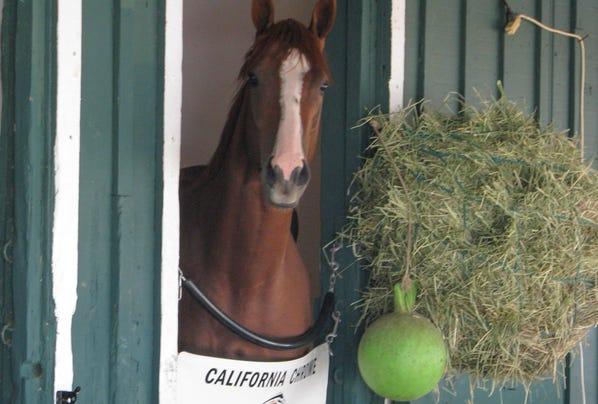 2014-5-19-california-chrome-pimlico-stall