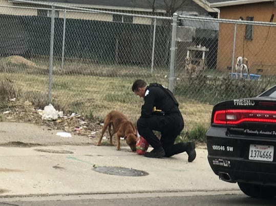 Fresno police officer stops to feeds hungry, stray dog who was picking through trash