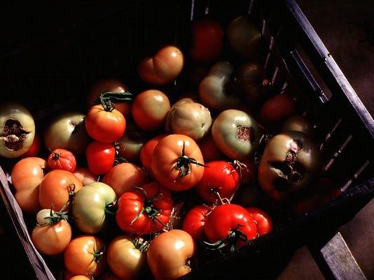 ocallaghan column tomatoes.jpg