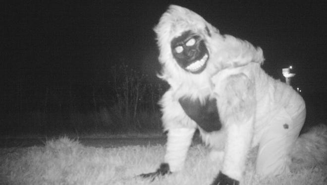 This Nov. 22, 2016 photo provided by the Gardner Police Department shows a person dressed in a gorilla costume  on one of the two motion-activated cameras intended to investigate reports of mountain lions at a park in Gardner, Kan.