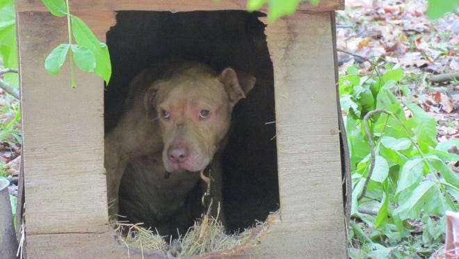 A chained dog sits inside a shelter at a residence near Natchitoches.