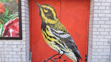 NYC mural project spotlights birds endangered by climate change