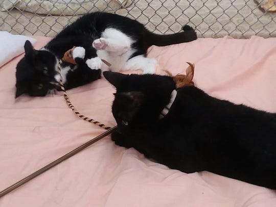 Boots and Jet are available for adoption at 10807 N.
