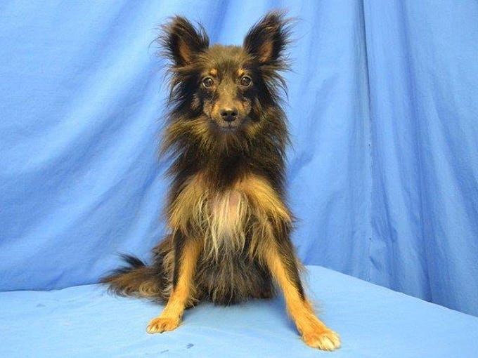 August 27 - Corey is available for adoption at the