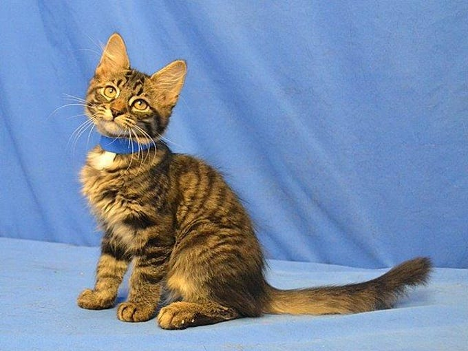 September 2 - Roscoe is available for adoption at the