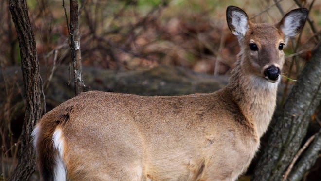 You set a trap in the hopes of catching a nuisance coyote and instead nab a deer. If you catch something other than your target animal in a lethal trap, you've created a much bigger problem than you were trying to solve.
