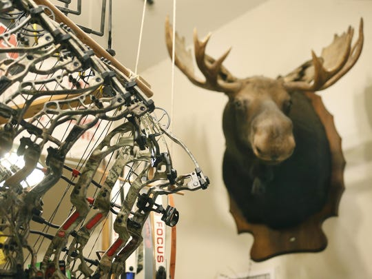 Bowhunting bows with the head of a moose in the background