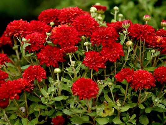 -SP LIFE FLOWER POT5.jpg_20060906.jpg