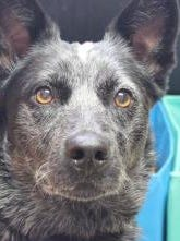 Abby is the Current-Argus pet of the day.