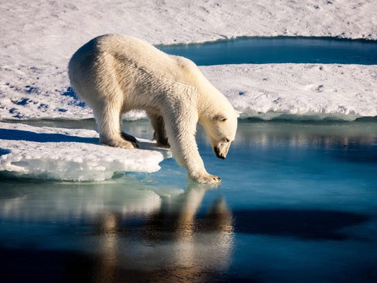 The Polar Bear Jump in Rome will benefit the Children's