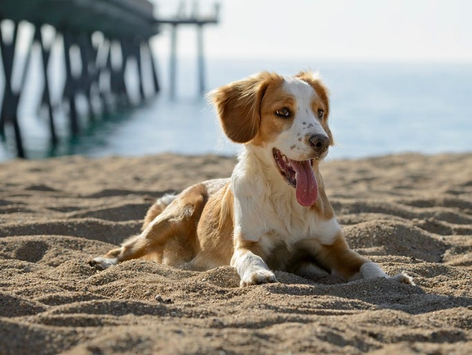 Best Dog Friendly Beaches