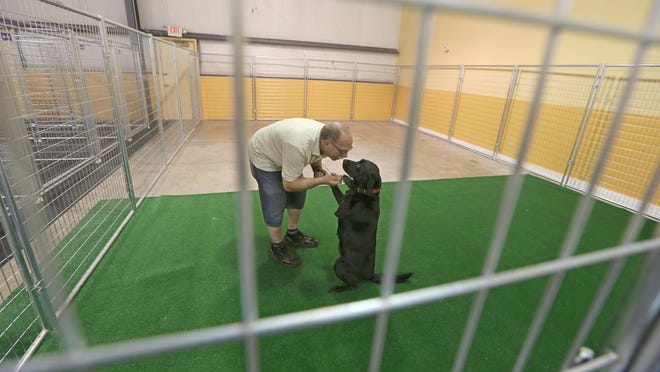 Marty Yesowitch, Spencerport, works with Callie, a 5-year-old black lab, in the boarding area of his new business, Labs of Love, in Spencerport on June 16, 2015.