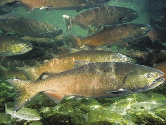 salmon - fed photo 2015-03-09 at 3.51.58 PM.jpg