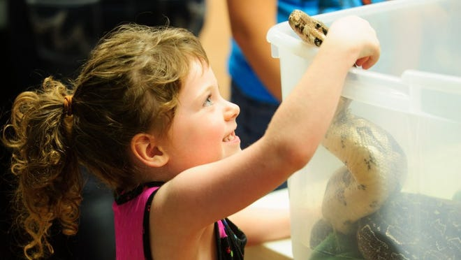 Four year-old Cadance Newkirk of Boonville smiles as pets a Boa Constrictor at the Harp's Exotic Fish and Pets table at a past Reptile Roundup, presented in partnership with the Tri-State Herpetological Society at a past at Wesselman Nature Preserve.