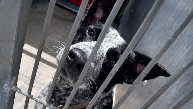 Ventura County Animal Services shelters will be closed on Mondays.