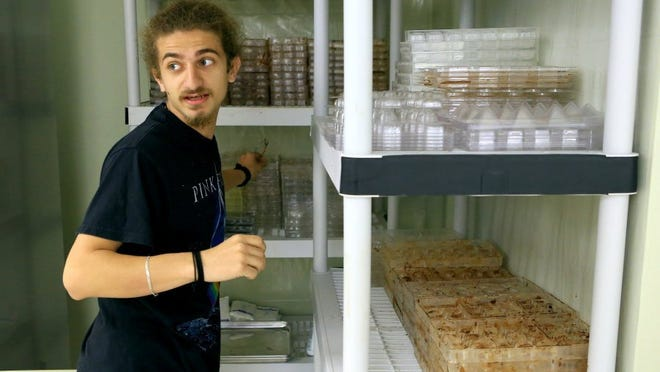 GABE HERNANDEZ/CALLER-TIMES Yazan Ghraowi looks through different molds to make chocolates. The Ghraowi family has a long tradition in the Middle East as chocolatiers and now runs the Ghraowi Chocolate Company on Agnes Street.