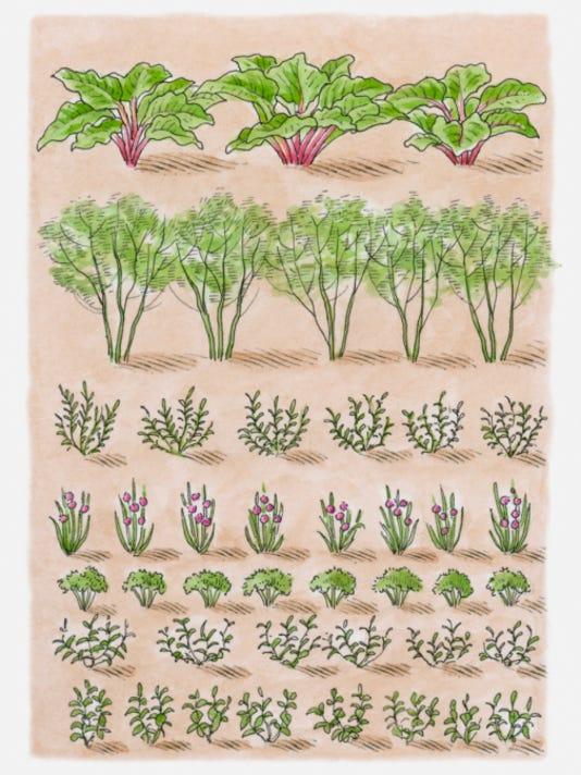 garden crops.jpg