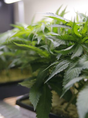 Vermont's marijuana legalization law, which goes into effect July 1, 2018, allows up to six plants to be grown in a home.