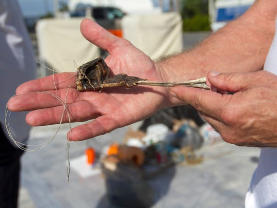 A volunteer shows a bird's leg entangled in fishing line that was brought in for a coastal cleanup on Saturday, January 2, 2015, at Fort Myers Beach. Another participant found a dead turtle that was trapped by a boat ladder she found floating in the water.