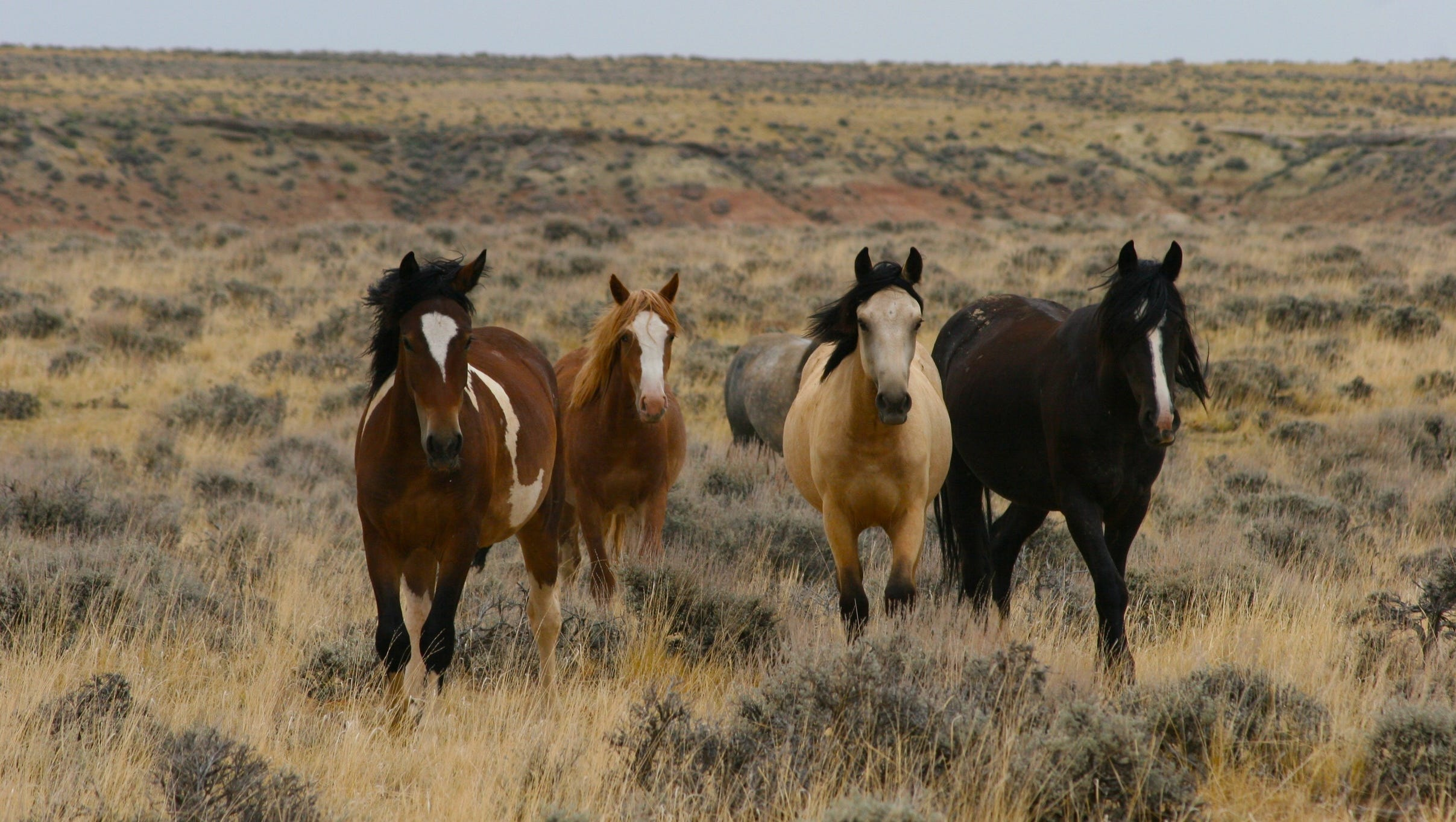 10 Great Places To See Wild Horses