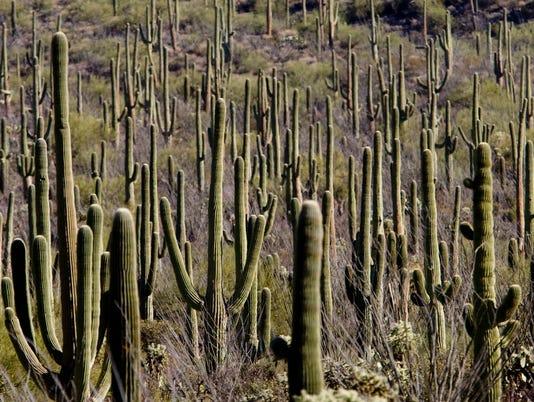 cactus-phoenix-tucson