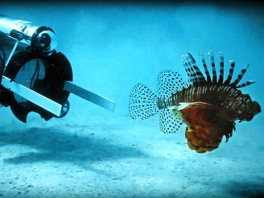 In this artist photo provided by Robots in Service of the Environment shows, taken April 18, 2017, the first day a new robot was used to hunt dangerous and invasive lionfish in Bermuda. It stuns lionfish with an electric current and then the fish is vacuumed into a container alive and it can later be sold for food. The robot caught 15 lionfish in 48 hours of initial testing. New, creative but more high-tech methods may finally be turning the tide in the fight against invasive species. Non-native plants and animals cost the world hundreds of billions of dollars a year.