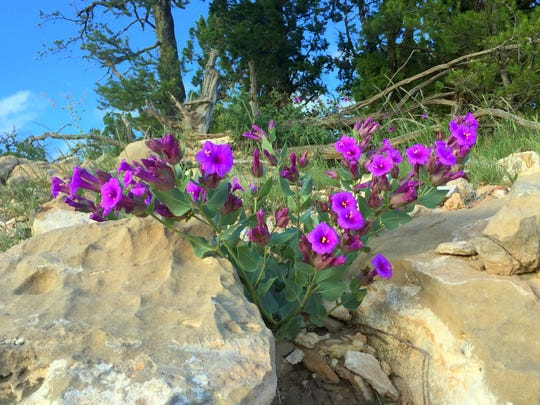 Rocky crevices display vivid blooms.