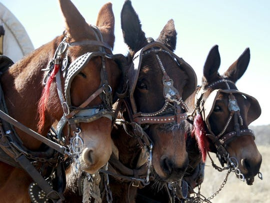 A Bring Your Own Horse Trail Ride will be 8 a.m.-noon Saturday, July 28, at the San Angelo State Park.