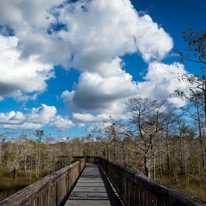 A boardwalk heads into cypress trees at the Kirby Storter