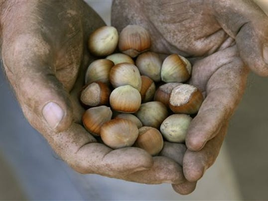 Hazelnut growers battle packers over pricing
