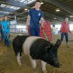 Area youth bring on the livestock at spring show, jamboree