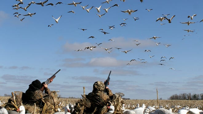 Hunters taking aim at snow geese near Tunica, Mississippi.