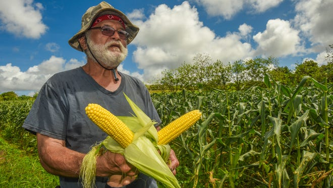 Farmer Ernie Wusstig shucks a couple of his super sweet corn just picked off their stalks at his farm in Dededo on Friday, March 10, 2017.