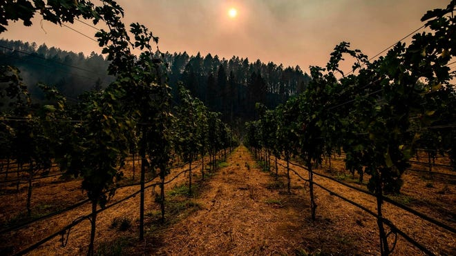 Smoke hangs among charred trees on the hillside behind a vineyard in Napa Valley, Calif., on Sept. 28.