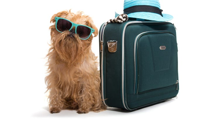 If you travel with your pets, Virgin Atlantic is ready