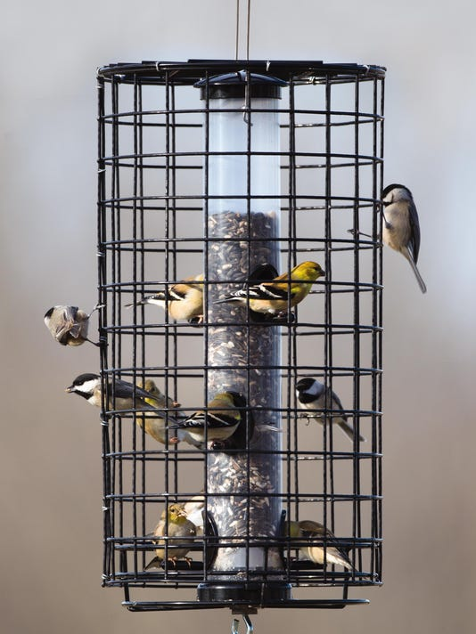 Birds using a caged feeder