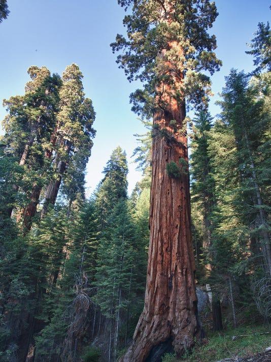 BLM sequoia 1