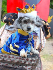 It's August, and it's time for the Michigan Renaissance Festival's Royal Pet & Ale Fest.